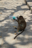 Monkey see, monkey do on Gharipuri Island