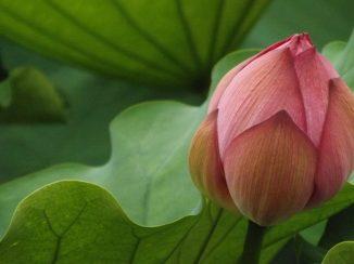 lotus 2016-07-16