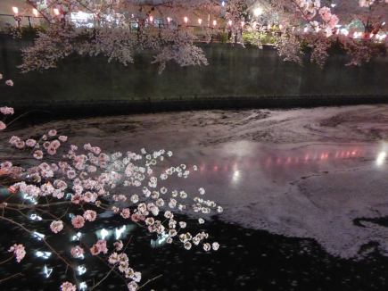 petals on the river